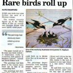 Rare birds roll up