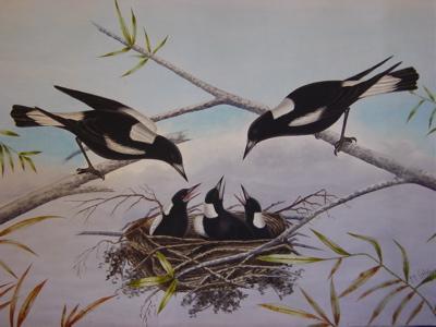 Calvert_magpies
